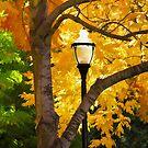 A Lamp in the Park by Bonnie M. Follett