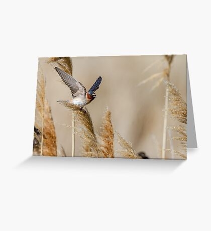 Wind -- Cliff Swallow Greeting Card