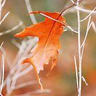 Fallen Leaf by Laurie Minor