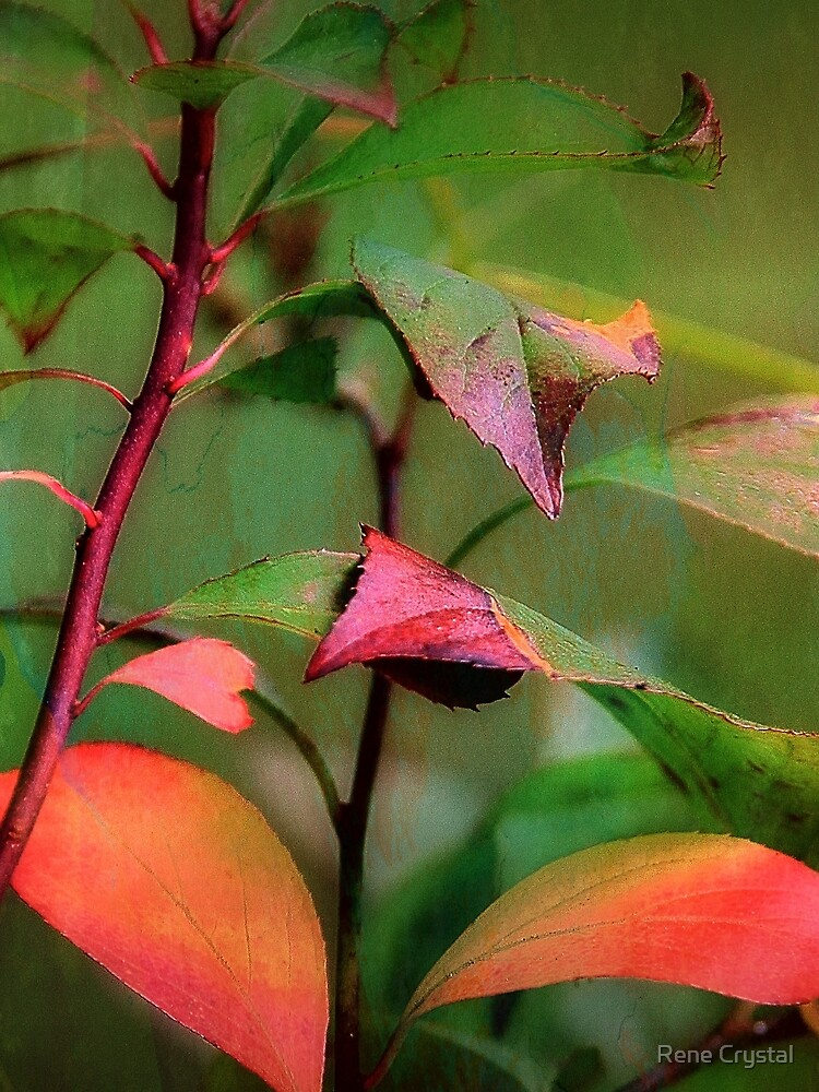 Autumn's Glow by imagesbycrystal