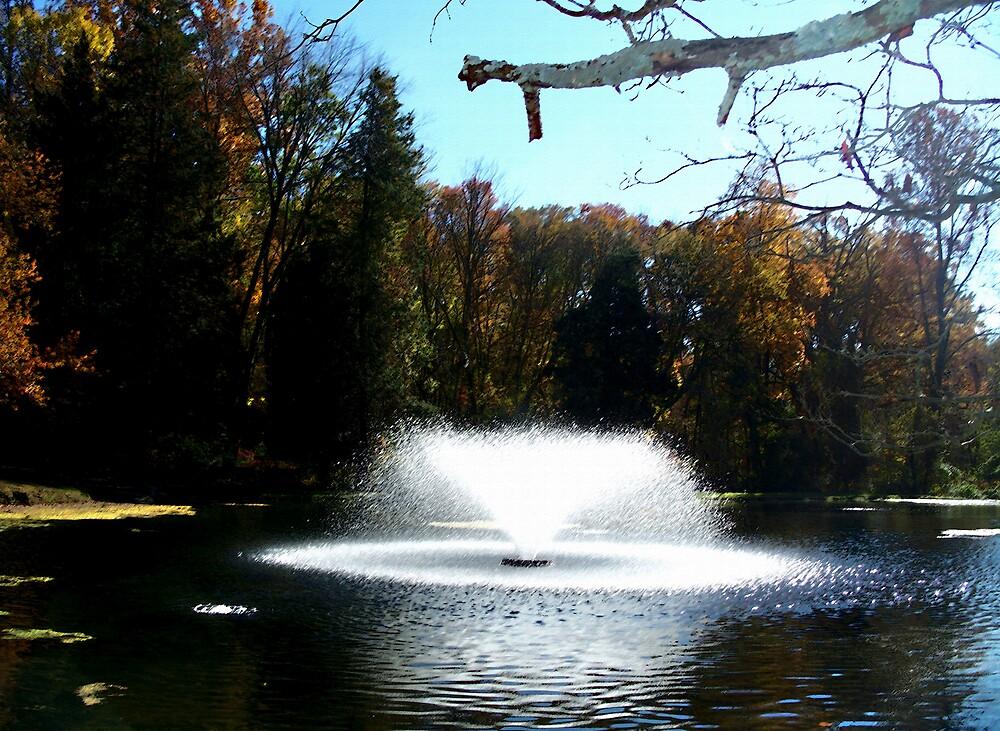 Fall Makes a Splash by Judi Taylor