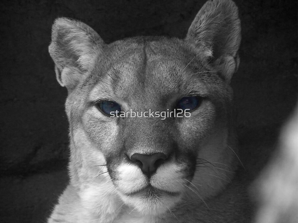 Cougar Blue Eyes by starbucksgirl26