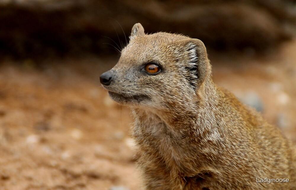 Yellow Mongoose by Ladymoose