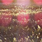 Sunset by pokegirl93