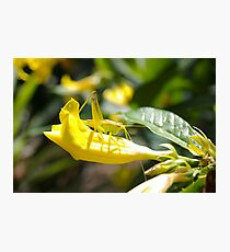 Grasshopper Hiding Photographic Print