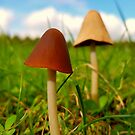 mushrooms in the grass by ashley reed