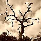 dead tree by ashley reed