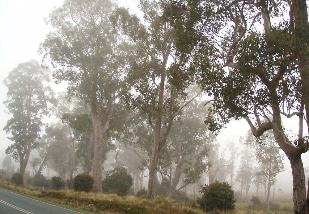 foggy morning mist near Fossey River this morning - west coast Tasmania by gaylene