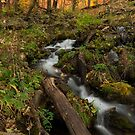Magical Forest Creek by Sue  Cullumber