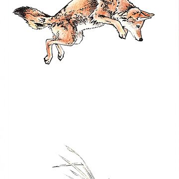 TRICKSTER COYOTE by juliawaters