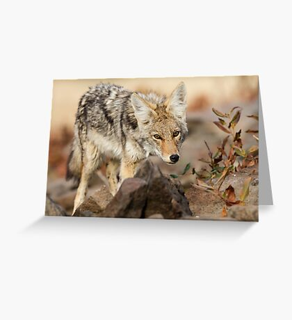 """""""You're in my way"""" -- Young Coyote Greeting Card"""