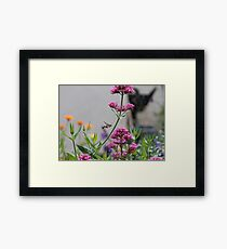 Hummingbird hawk-moth in English country garden Framed Print