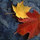 Maple Leaf Pair on Moody Grey Rock by Anna Lisa Yoder