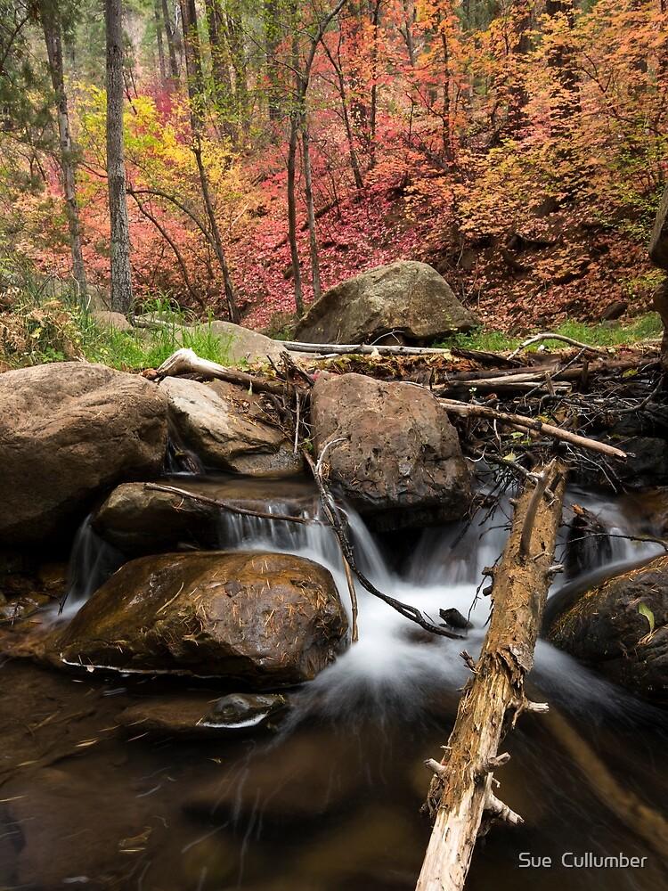 Splashing into Autumn by Sue  Cullumber