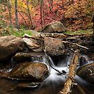 Splashing into Autumn by Sue  Cullumber
