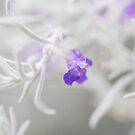 Purple one by NelehsStuff