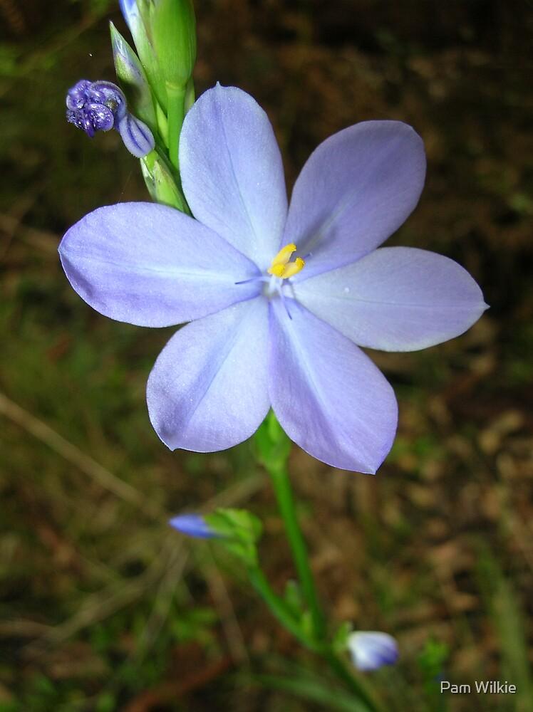 Blue Wild Flower  by Pam Wilkie