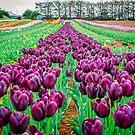 Purple Tulips by NelehsStuff