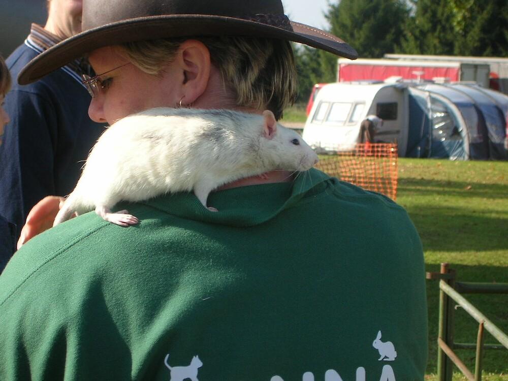 pet rat at rockingham show by yorkyanne