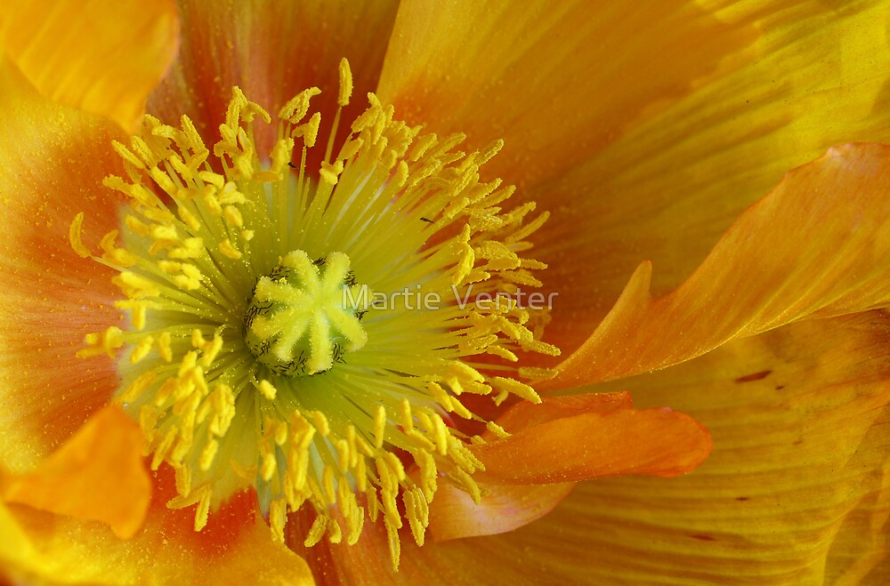 Poppy Heart by Martie Venter