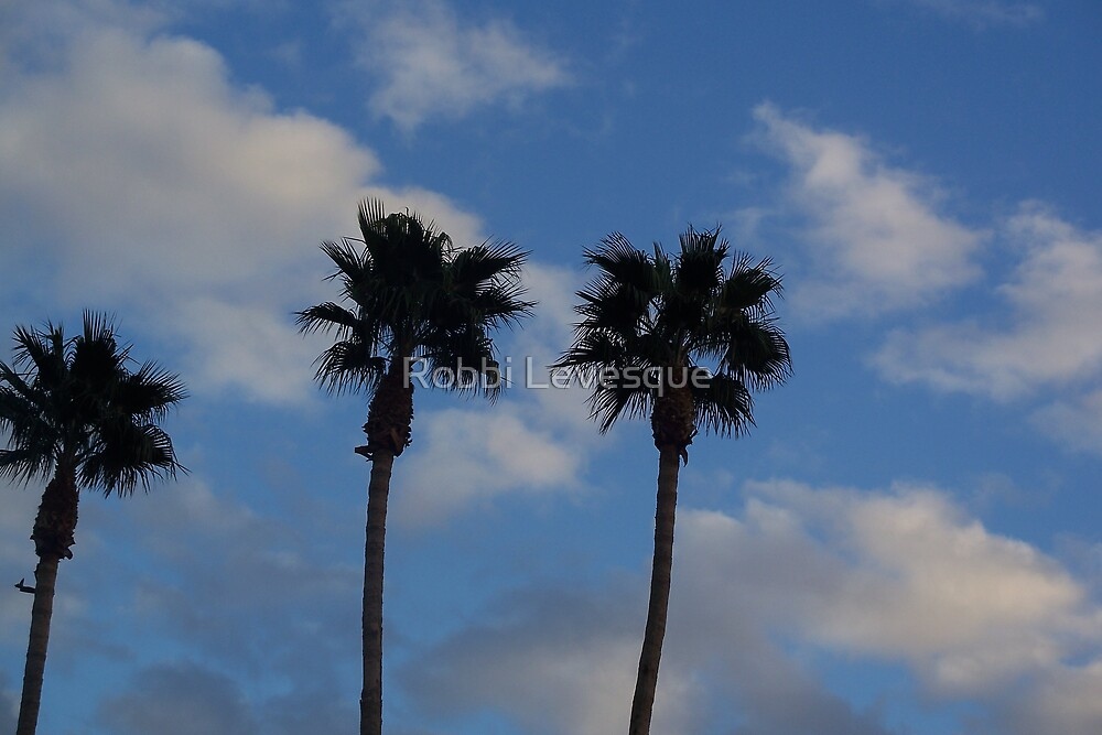 Blue Skies & Palm Trees by down23
