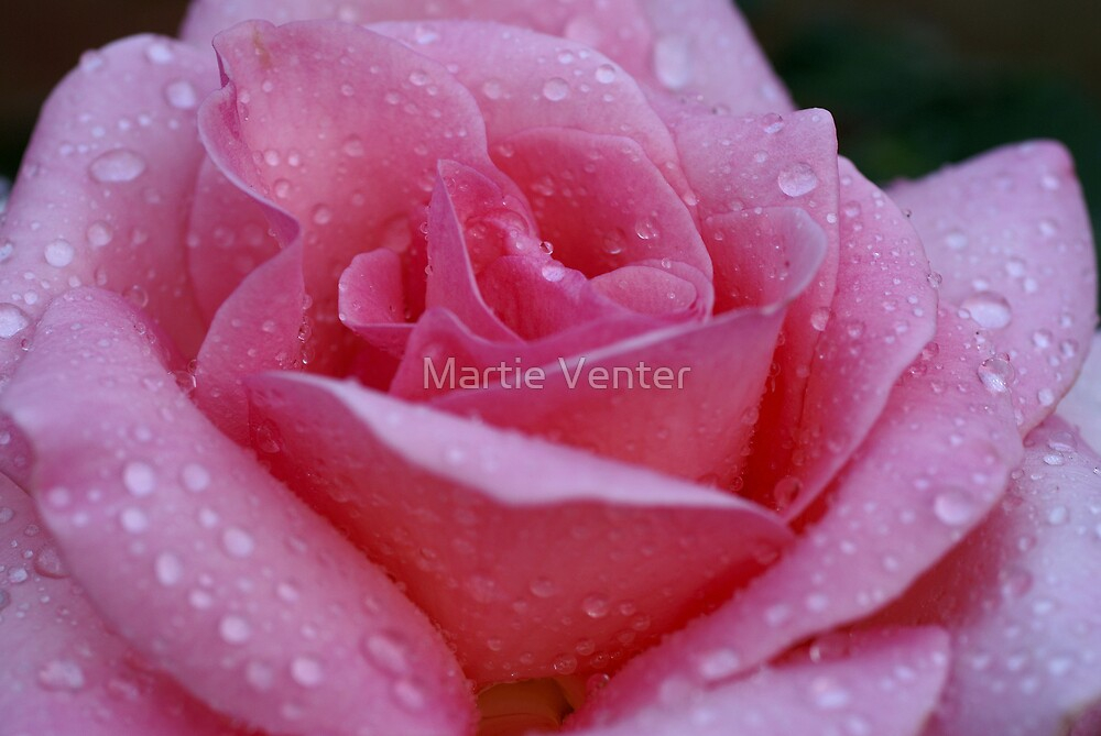 Pink Perfection by Martie Venter