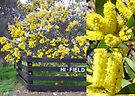 Australian - Golden Acacia by DPalmer