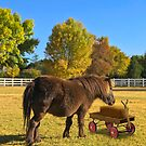 Horse and Wagon by Randy Turnbow