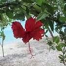 Hibiscus bowing by Annie Smit