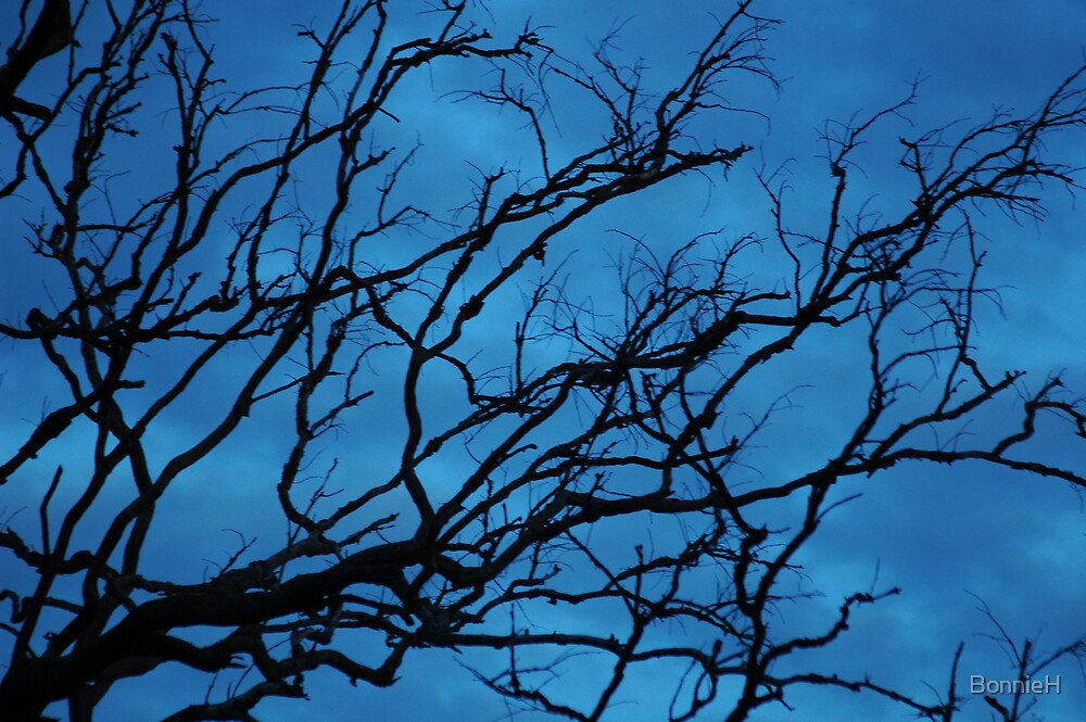 Empty branches at dusk by BonnieH
