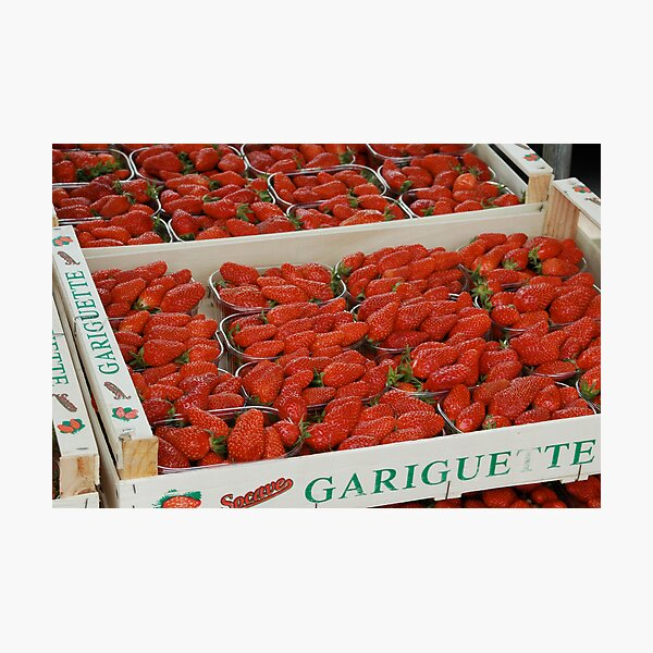 Fresh strawberries in France Photographic Print