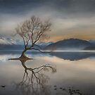 Dusk Falls on the Wanaka Tree by Linda Cutche