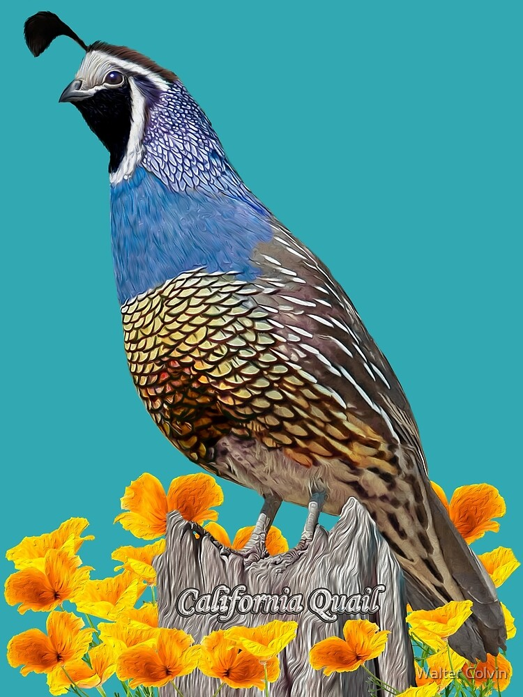 California State Bird And Flower Postcard By Skyviper Redbubble