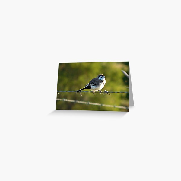 Double-barred Finch Greeting Card