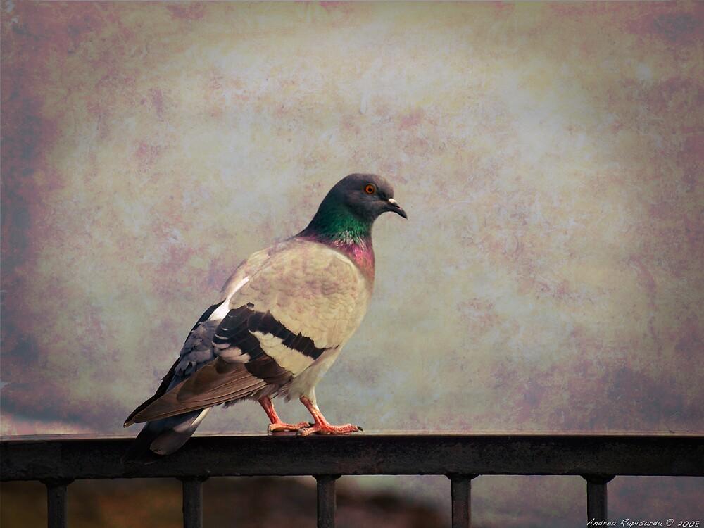 Il piccione by Andrea Rapisarda