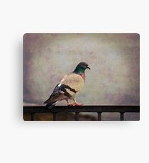 Il piccione Canvas Print
