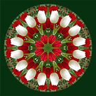 Tulip Kaleidoscope - Red And White by rvjames