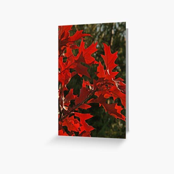Oak Leaves in Autumn Flame Greeting Card
