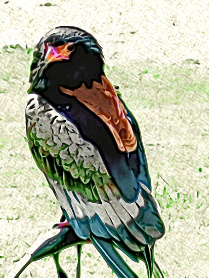 Bateleur Eagle by Trevor Kersley