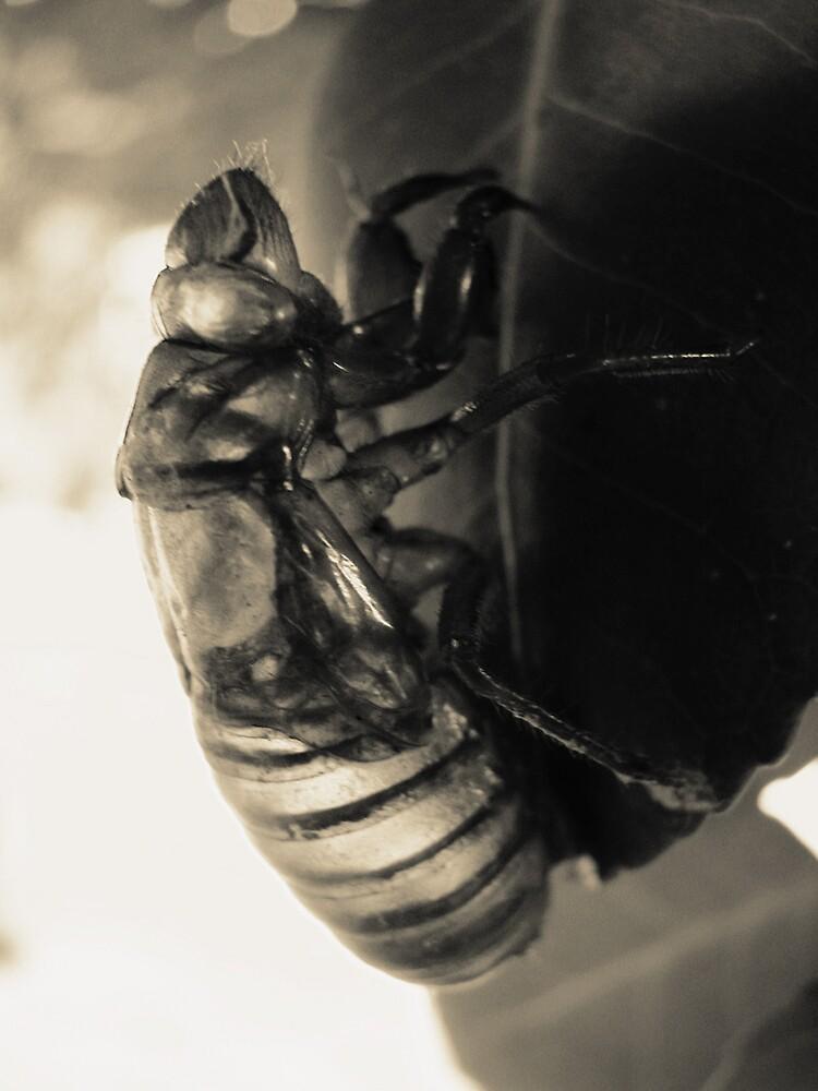 Cicada by anathema