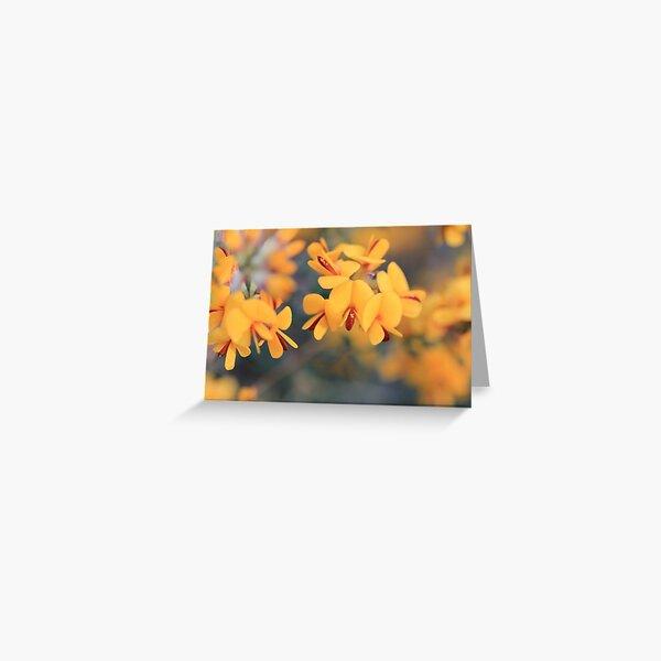 Bush-Pea Flowers Greeting Card