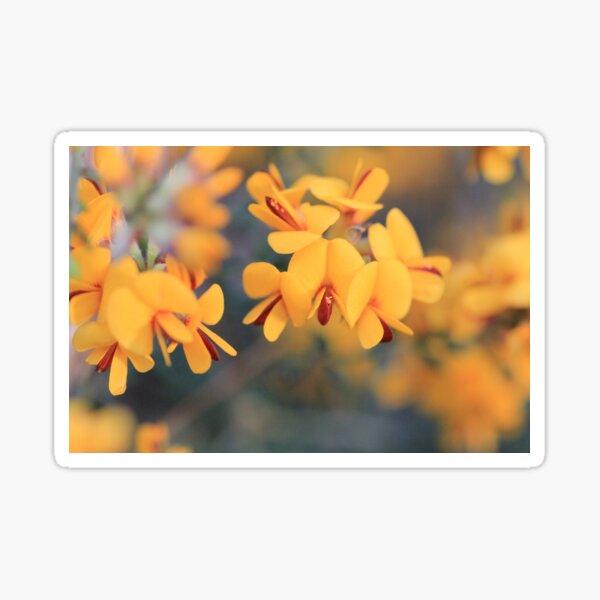 Bush-Pea Flowers Sticker