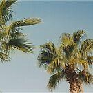 Palm Trees by Debja