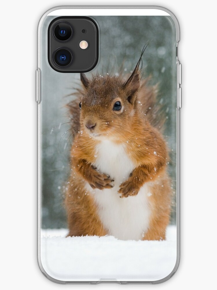 Squirrel iphone 11 case