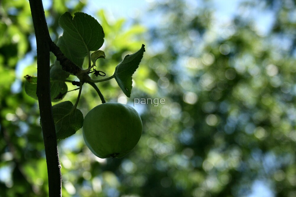Apple Tree by pange