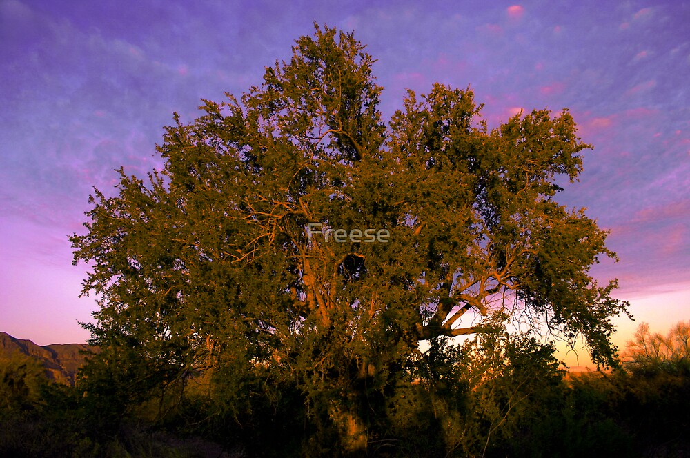 Mesquite Sunset by Freese