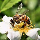 Honey, I am buzzzyyyy! by Susan van Zyl