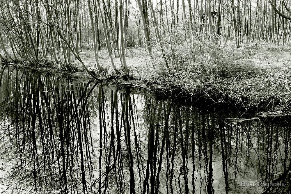 Tree patterns by Brian Reynolds