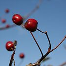 Autumn Red by Pamela Jayne Smith