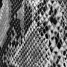 Faux Snake Skin by Catherine Hamilton-Veal  ©